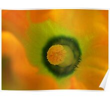 The Heart Of The Marrow - Courgette Flower - NZ Poster