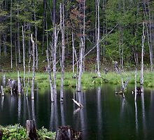 Beaver Pond by James Lady