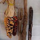 Indian Corn by Deanne27