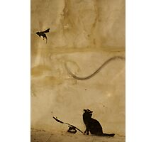 Cat vs Rat Photographic Print