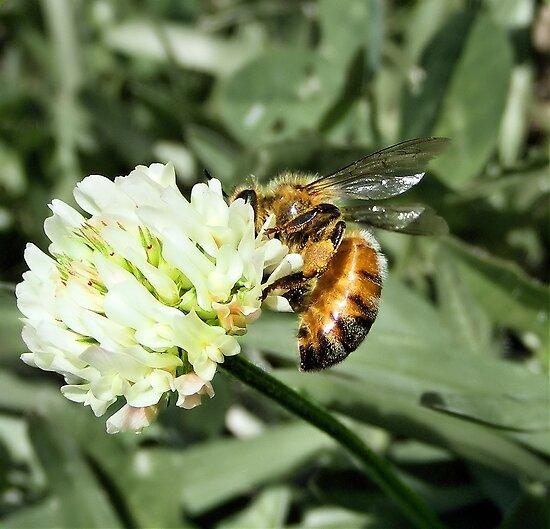 Gathering Pollen by EbonyKate