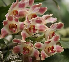 Pink and White Orchids by Kimberly Johnson