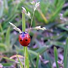 Bright Red Ladybug by Kimberly Johnson