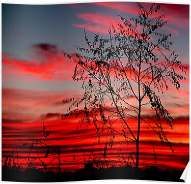 Templestowe Sunset by Rosina  Lamberti