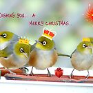We Three Kings Of Orient Are - Silver-Eyes Christmas Card - NZ by AndreaEL