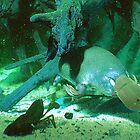 Platypus by pedroski