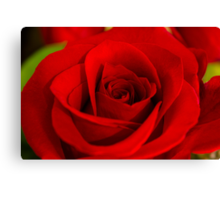 Soft Red Rose Canvas Print