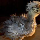 Frizzle Chick by Sheri Ann Richerson