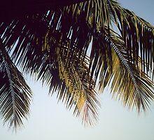 Coconut enclave by Yogesh Sane