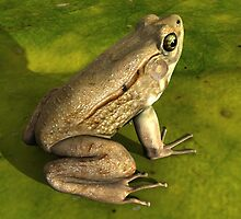 Frog by Ganz