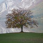 Autumn, Lake Bohinj Slovenia by oscars