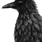 Raven by darkbluesign