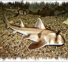 Port Jackson Sharks by Rachael Taylor