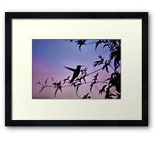 Sunset Hummingbird Framed Print