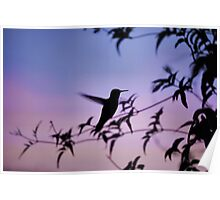 Sunset Hummingbird Poster