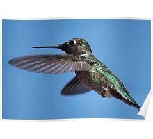 Humming Bird Inflight Poster