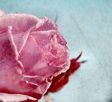 Pink Rose by BluAlien