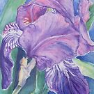 Tuscan Iris by Carolyn Bishop