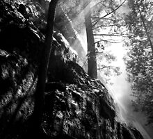 Good Timber in Vernal Falls Mist, black & white by James Lady