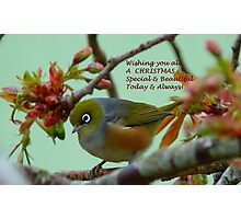 Special & Beautiful - Christmas Greeting Card - NZ Photographic Print
