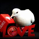 Always Make Time For Love - White Dove - NZ by AndreaEL