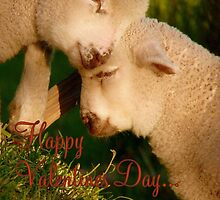 Happy Valentines Day - Lambs - NZ by AndreaEL