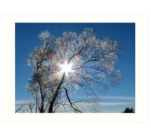 Fairy Dust - Tree Coated In Hoar Frost - Gore NZ Art Print