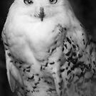 Snowy Owl by Moth