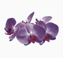 Purple Orchid Trio by Susan Savad