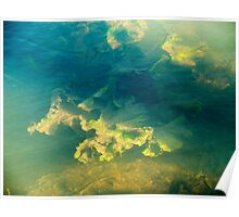 Freshwater river weeds in sunlight under the rippled aqua marine coloured water surface Poster