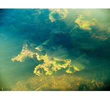 Freshwater river weeds in sunlight under the rippled aqua marine coloured water surface Photographic Print