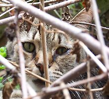 Cat in the brush by Johnnie R
