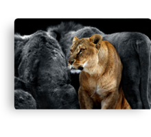 In The Lion's Den Canvas Print