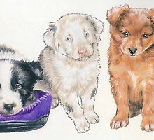 Australian Shepherd Puppies by BarbBarcikKeith