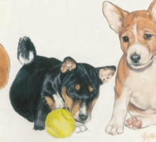 Basenji Puppies Sticker
