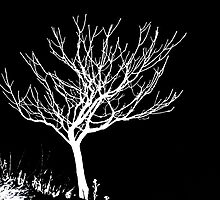 Solitary Tree - White on Black by Ryan Houston