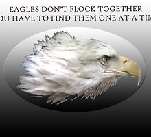 Eagles Don't Flock Together by Judson Joyce