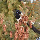 Magpie with Pinecones by DWMMPhotography