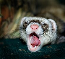 Love is a Ferret. by Mick Smith