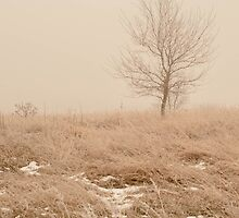 Lonely Tree in Winter by KatieMarit