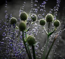 Russian Sage, Rattlesnake Master, Green and Purple by bjphotographs