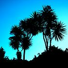 Cabbage Trees by wendy Wood