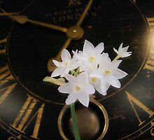 Tick Tock Narcissus by pattimus