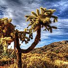Cholla near Sears-Kay Ruins by Roger Passman
