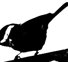 sketch that bird by rebecca smith