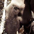 Elephant by Rebecka Wärja