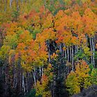 Fall Colors In Colorado by CarolM