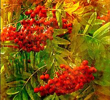 The Rowan by maureen bracewell