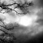 Storm by garain