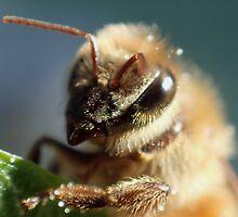 Honeybee Portrait by DWMMPhotography